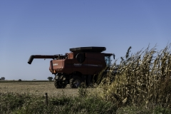 10-8-16 harvest-8262