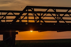 bridge and bird sunset-0106