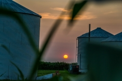 sunset in the corn-0017