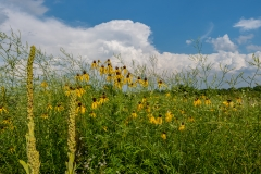 big-creek-flowers-and-clouds-web
