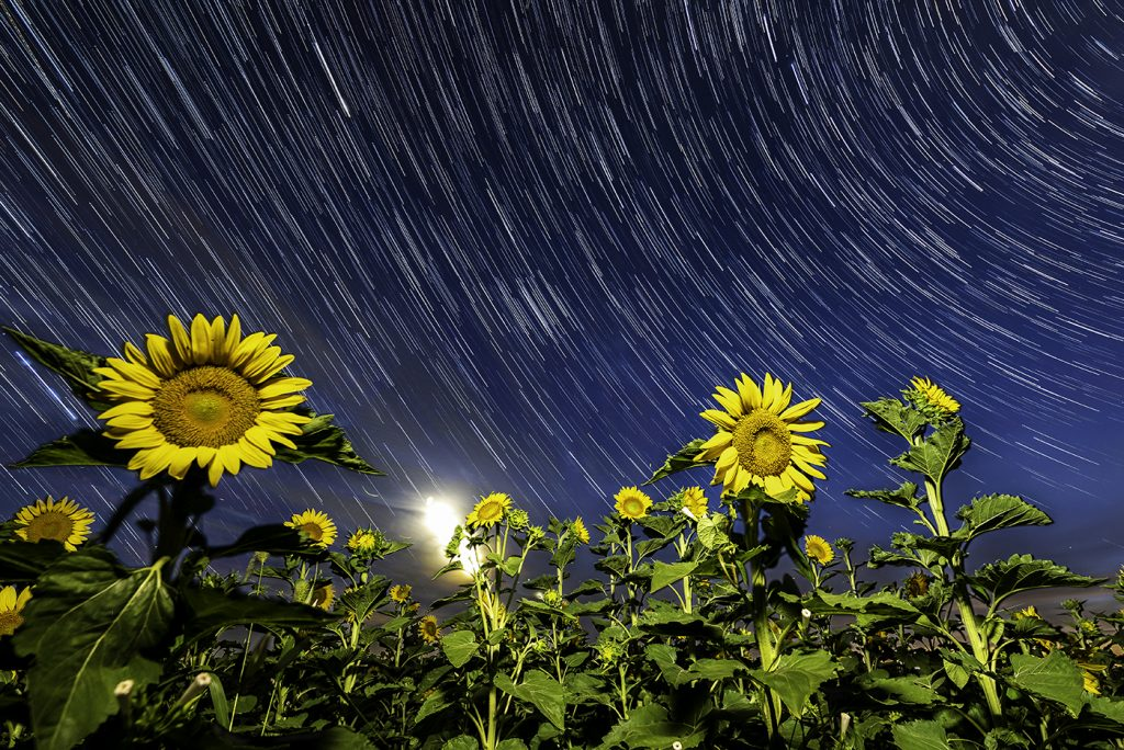 Iowa sunflower field star trail private workshops