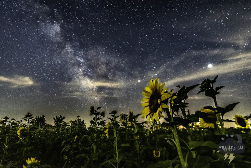 milky-way-sunflower-named-LR-1024x684.jpg